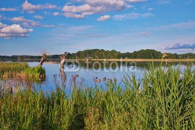 """Leinwand-Bild: """"Naturparadies Stuerscher See bei Stuer"""""""